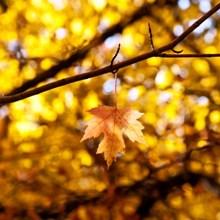 jesen_najbudalastija-tuga