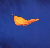 New Order - True Faith