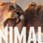 Maroon 5 – Animals