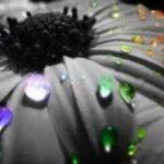 Vesna Parun – Ti koja imaš ruke nevinije od mojih